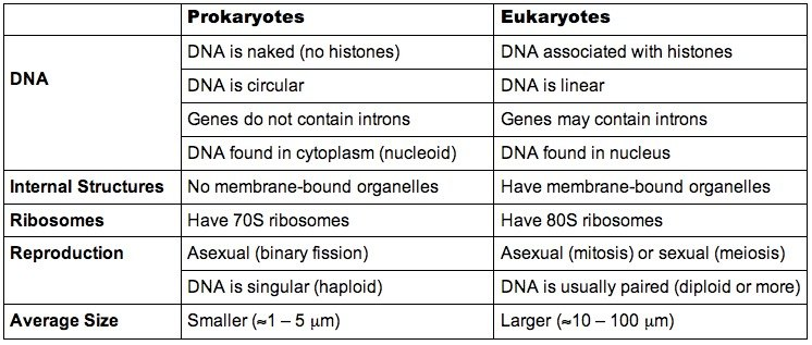 an introduction to the essay on the topic of eukaryotic organelles 2016-2-20  1 introduction to cells and organelles  (choice of topic,  eukaryotic cell organelles in class essay: imagine a.