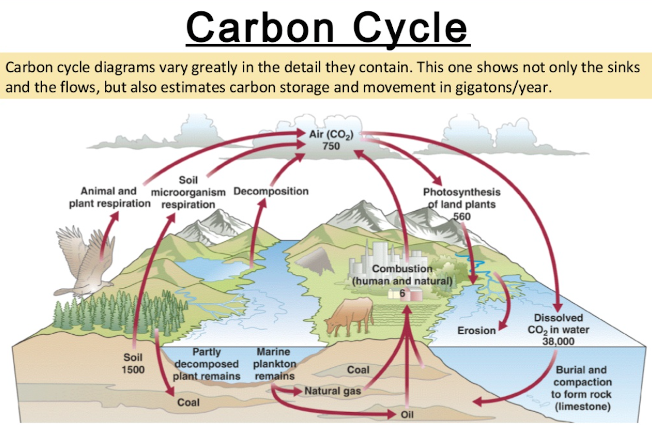 Mr horrocks biology 43 carbon cycling screen shot 2016 09 01 at 65757 am instructions after studying the carbon cycle above in ccuart Gallery