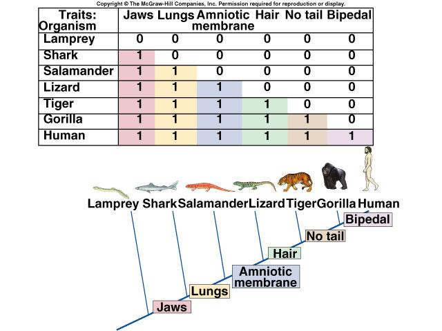 cladogram_c