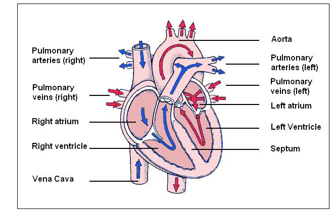 image credit: ibbiologywiki.foundry.com