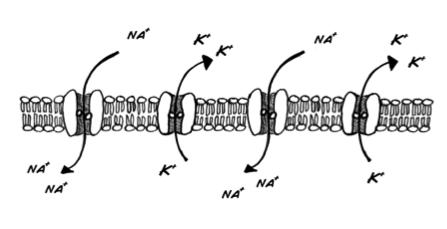 neuralMembrane